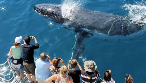 whale watching hervey bay coach tours