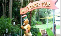 Ginger Factory Tour 3