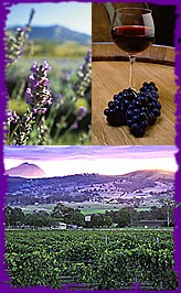 Scenic Wine Tour 1