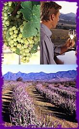 Scenic Wine Tour 2