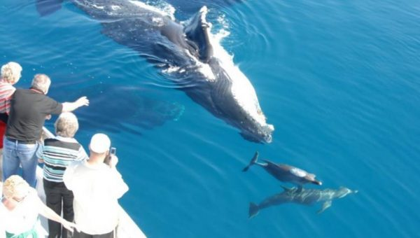 Whale Watching Tours Queensland